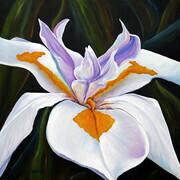 Africian Iris